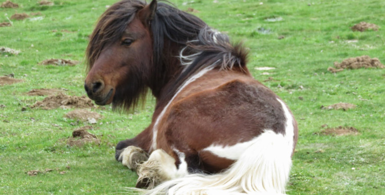 caballo_hipster